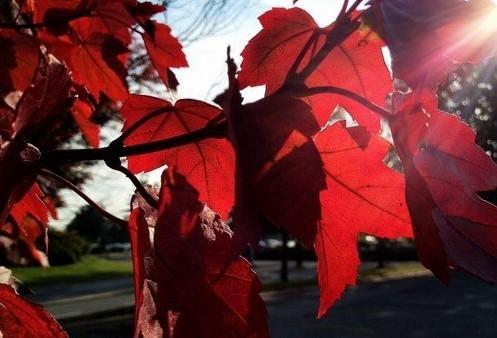 如何拍出漂亮精彩的紅葉2