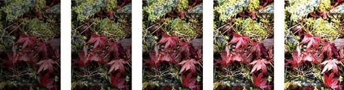 玩转摄影中的色彩元素8