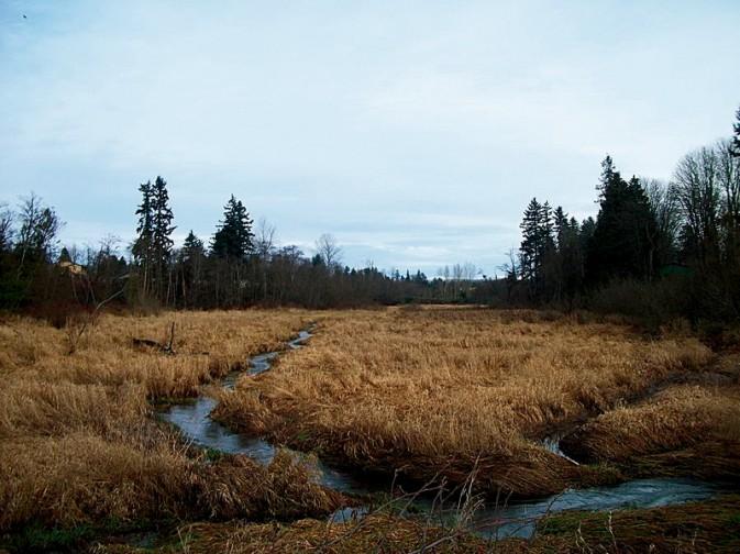 让蛮荒湿地充满色彩3