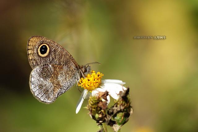 春天里的故事:春季生态拍摄10