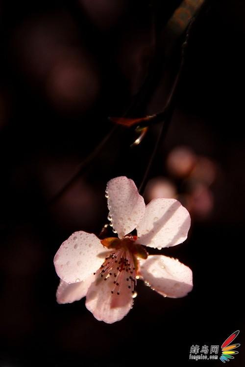 镜头与光影的完美组合捕捉春影8