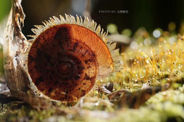 春天里的故事:春季生态拍摄8