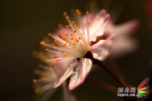 镜头与光影的完美组合捕捉春影19