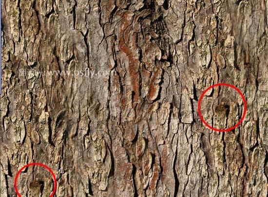 Photoshop合成科幻片中的树人魔怪5