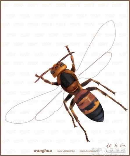 Illustrator網格實戰:繪制真實的黃蜂31
