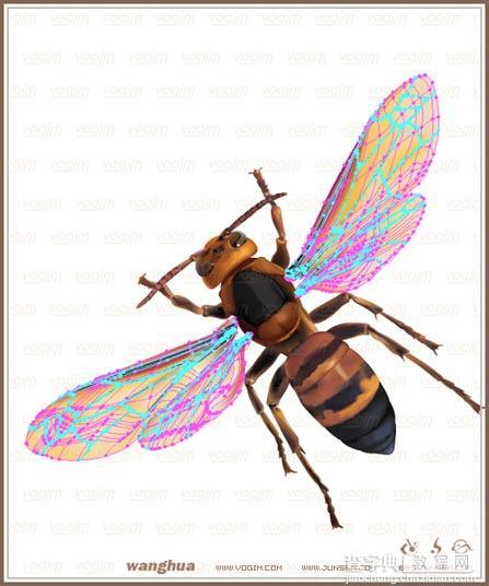 Illustrator網格實戰:繪制真實的黃蜂33
