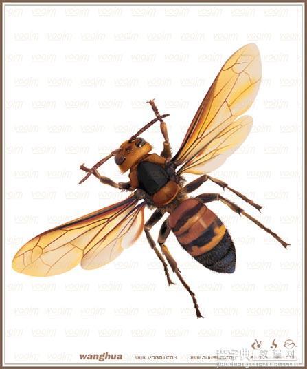 Illustrator網格實戰:繪制真實的黃蜂38