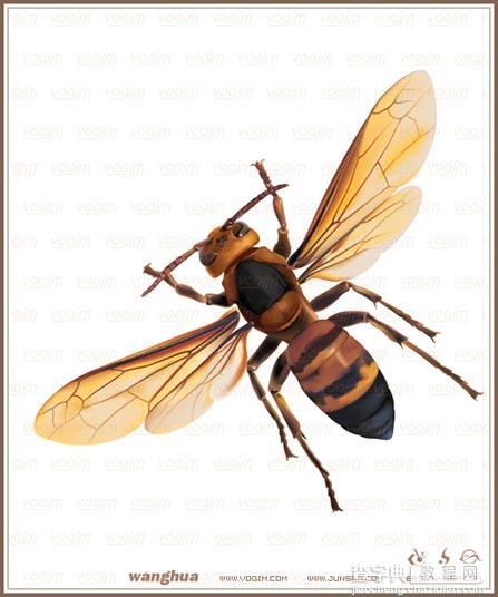 Illustrator網格實戰:繪制真實的黃蜂34